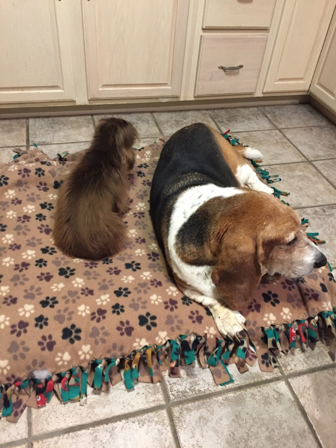 dogs-in-kitchen