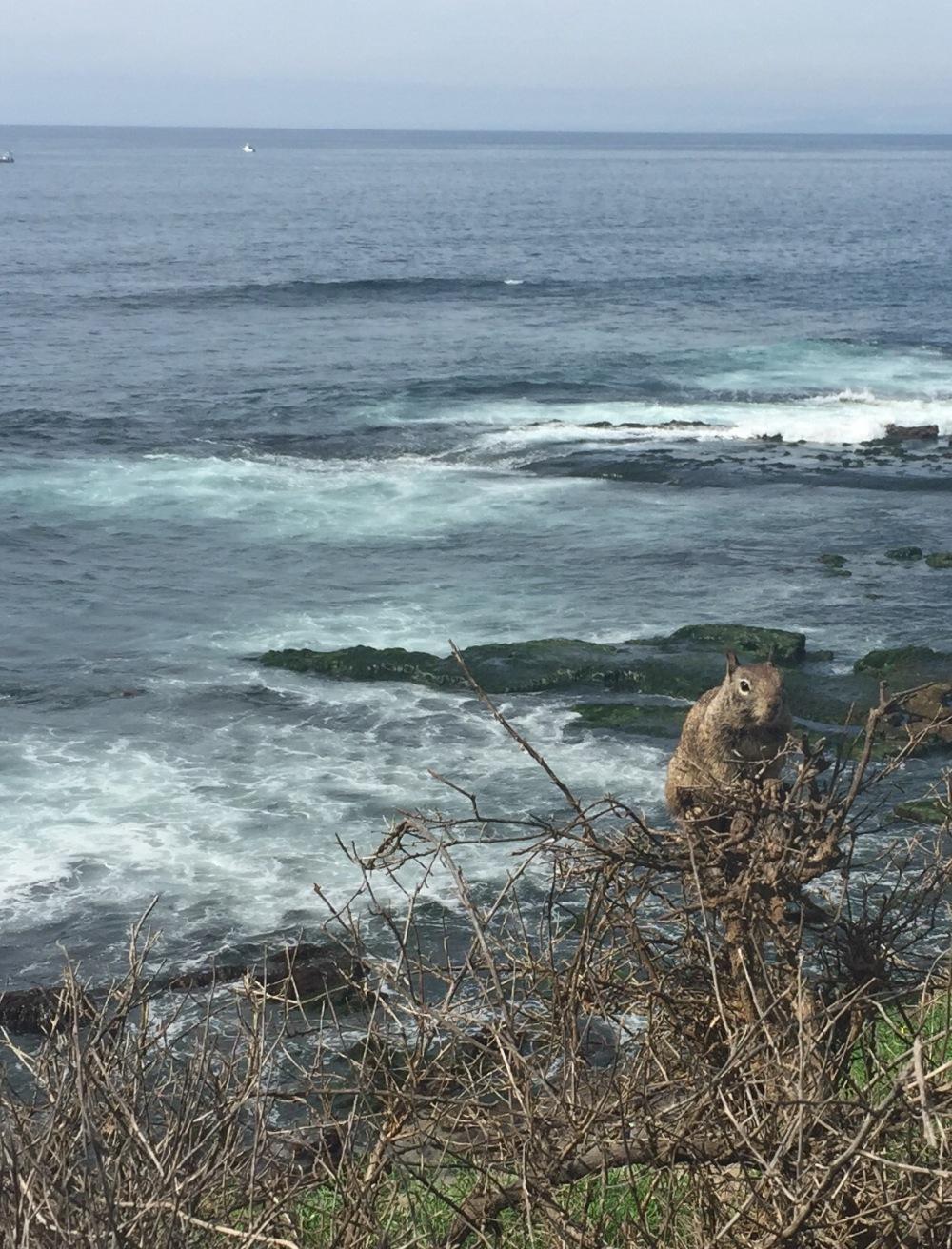 oceansquirrel 4
